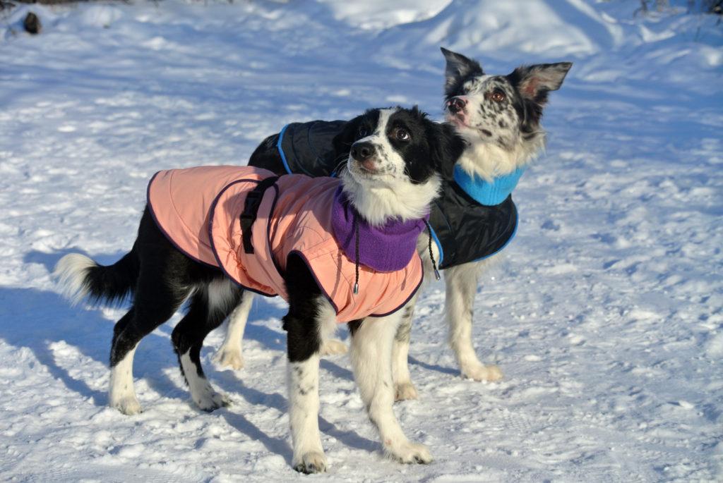 Товары для собак саратов